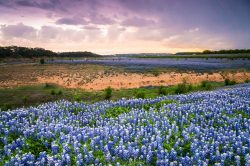 Bluebonnets were covering the bank of the Colorado River in Spicewood, Texas, as the storm clouds gathered in the sky.