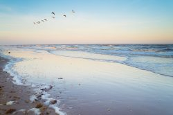 Brown pelicans fly over the beach in High Island, TX under the beautiful evening sky.