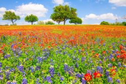 Wildflowers were blooming in an empty lot near Chappell Hill, TX, creating dream-like atmosphere.