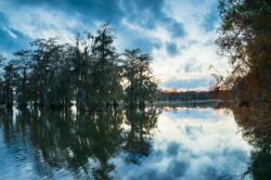 Dark clouds and bald cypress trees were reflected on Lake Martin in Louisiana,  right before the sunset on an autumn day.