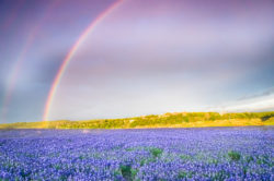 A double rainbow appeared in the sky over a field of bluebonnets by the Colorado River in Texas.