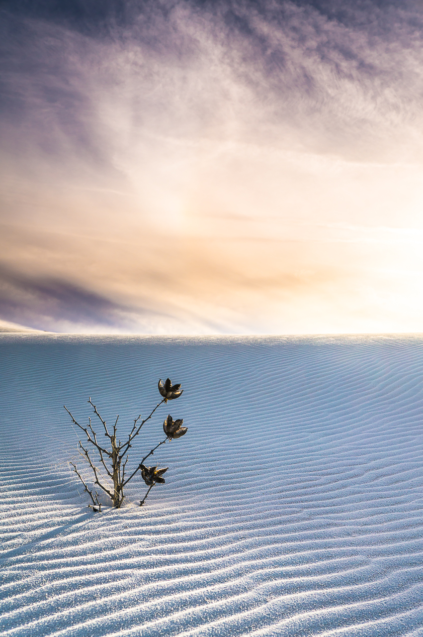 Winter Flowers Of White Sands Yucca New Mexico Deserts New