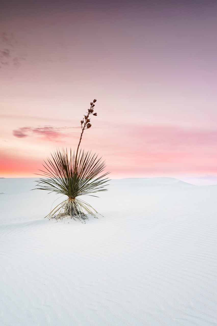 a white sands yucca under dreamy sky | new mexico | deserts new