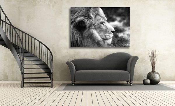 An image of a portrait of a majestic male African lion in black and white.