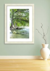 An image of a bald cypress tree and the Guadalupe River in Hill Country, Texas.