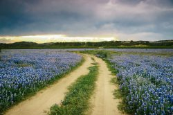The stormy clouds gradually gathered in the sky over a trail in the middle of Bluebonnet field in Spicewood, Texas.