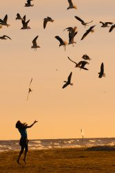A girl was enjoying the company of seagulls on a popular beach in Galveston, Texas, before the sunset.